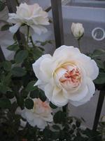 Mon_jardin_et_ma_maison