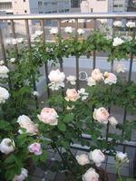 Mon_jardin_et_ma_maison_1