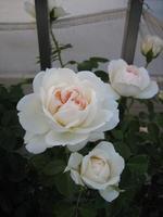 Mon_jardin_et_ma_maison_2
